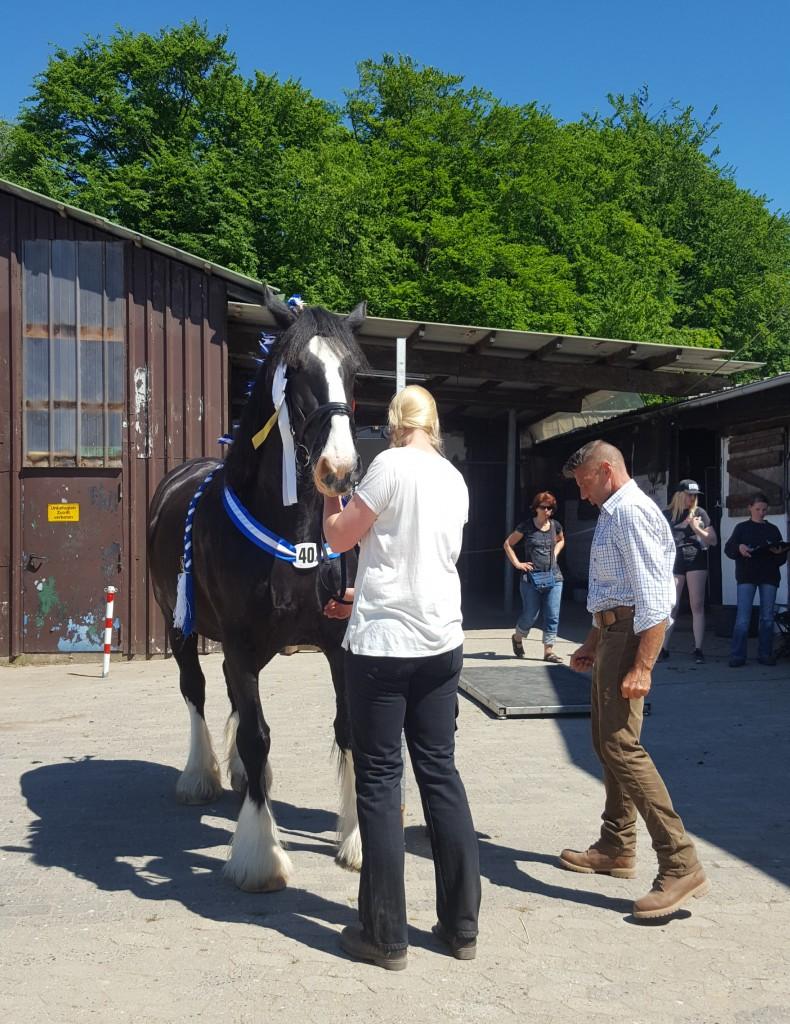 Shire Horse Show